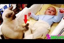 Video gatos y bebés