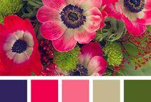 colour idead