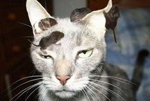 Katzen gemischt