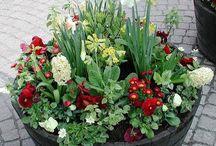 Krukplantering och trädgård