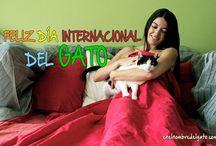 Cat Internaciotional Days / Días Internacionales de los gatos, Cat Internaciotional Days