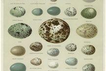 // egg.