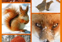 Winter Orange '' by Reyhan S.D.