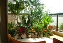 Jardinería/Plantas