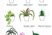 Plants/Indoor/Outdoor