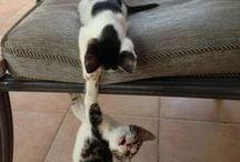 Macskák... főleg