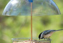 case per uccelli