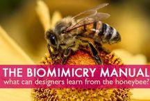 Biophidelic Design