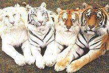 Iubind animalele iubiti viata! (2)