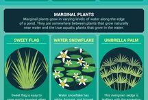 Flower Ponds