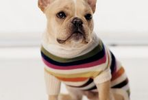 Too Cute / Mostly Frenchies but anything that makes me go AWWW