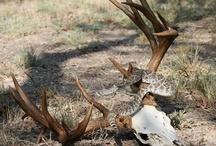 Hunting, Deer, Turkey