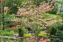 Kebon Garden