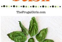 Herbs- grow and dry