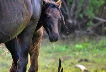 Horses Through The Lens