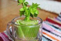 Zöldségek, fűszer növények, hagymák a konyha ablakból