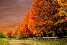 Autumtopia / Autumn....the year's last loveliest smile!