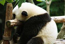 >>Pandas>>