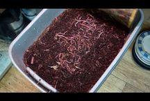 Solucan Gübresi Üretim Videolar