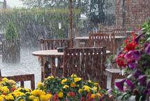 Příroda v dešti / deště