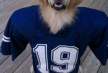 Dallas Cowboys TAILgaters / Dallas Cowboys dogs, and other pet products pictures and ideas!