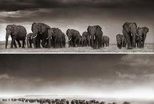 Photographer: Nick Brandt / #photo #nick_brandt #wildlife_photography