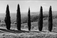 Alberi (in bianco e nero) / Black & white trees