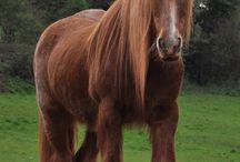 HORSES / by Kira Stackhouse