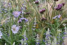meadow plant combos