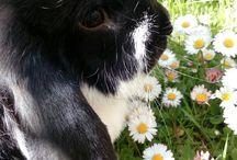 Waldemar the Bunny