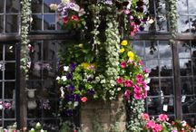 A thing of beauty is a joy forever. / Floral Designs and Gardens! / by Brenda Mennen