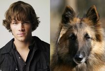 SPN Characters as Animals