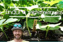 kertészeti videók