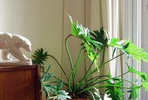 Menudo Vergel / Estas plantas (reales y ficticias) son selváticas.