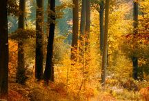 Autumn /fall.... love
