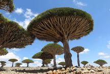 Unique Trees / Arboles Unicos