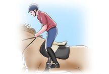 !Horses / Pferdetraining füttern Rassen Reiten verbessern