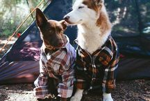 Dress to Impress / Now that your pet has the best supplies from Best Pet dress them up for fun! Make your furry friend the stylish of the pack. Or give every one a little laugh with some of the funniest outfits.