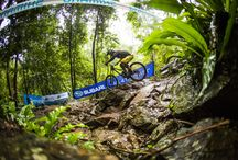 Mountain Bike Riders / Mountain Bike Riders In Action