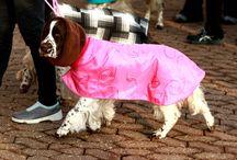Concours de beauté canin