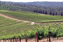 Renwood in the News / The beautiful Renwood winery is just the place travel writers, bloggers, and filmmakers love, not to mention wine geeks, reviewers, and judges.