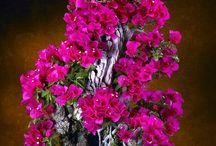 Loveee bonsai