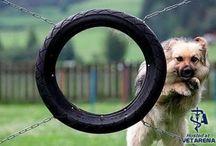 Funny Dog Photos / A Collection of Funny Dog Photos