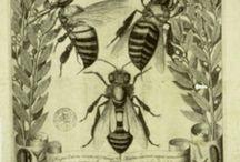 Bee Engravings