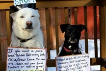 """Adoption Love / """"Those who say you can't buy love have never paid an adoption fee."""" / by ArcaNatura Natural Pet Products"""