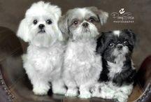 Pet Photo Shoots / All about pets!!