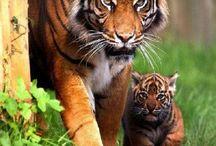 PAWPRINTS / Cute Animals