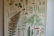 Botanical Wall Charts
