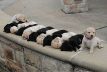 Cuties / We love animals! Especially when they sleep because they are so cute!