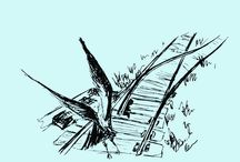 Volare / Fenomenologia degli uccelli in volo